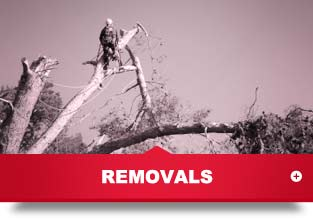 home_cta_removals_a
